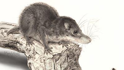 Säugetier-Chimäre