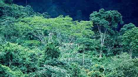 Regenwald in Chiapas