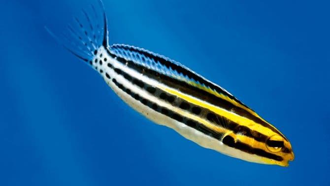 Der Fisch sieht zwar harmlos aus, aber wenn er zubeißt... Na gut, er ist wirklich ziemlich harmlos.