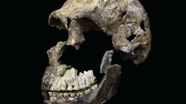 <em>Homo naledi</em> Schädel