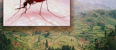 Malaria-Mücken auf dem Vormarsch