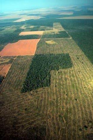 Soja statt Wald
