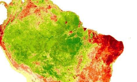 Vegetation während der Trockenzeit