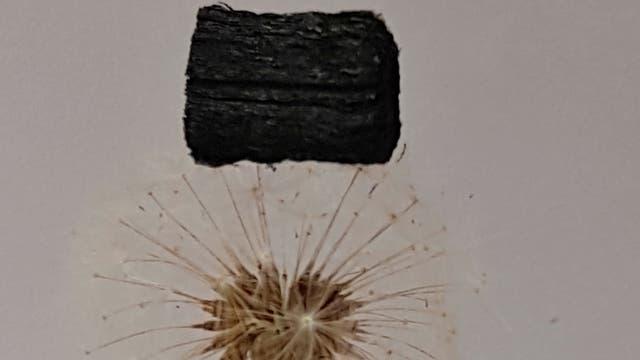 Ultraleichter und hochkomprimierbarer Bio-Schwamm