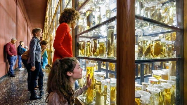 Nasssammlung des Berliner Museums für Naturkunde