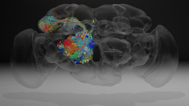 Eine Auswahl von Neuronen