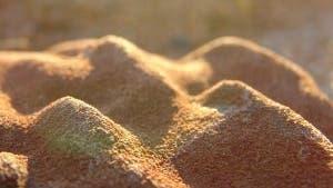 Stromatolithe in der Abenddämmerung