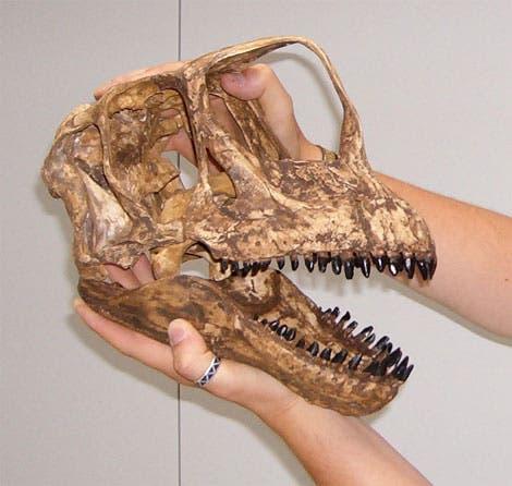 Rekonstruktion des Schädels eines <i>Europasaurus holgeri</i>