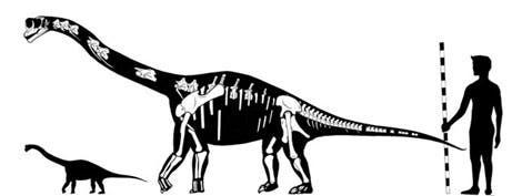 Größenvergleich des <i>Europasaurus holgeri</i>