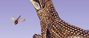 Urzeit-Kroko