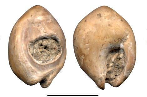 Schnecken-Schmuck aus Oued Djebbana