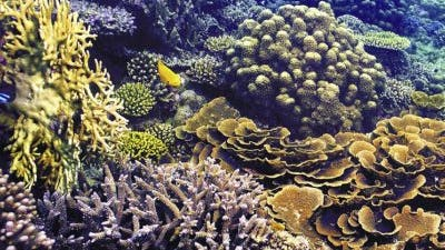 Gesundes Korallenriff