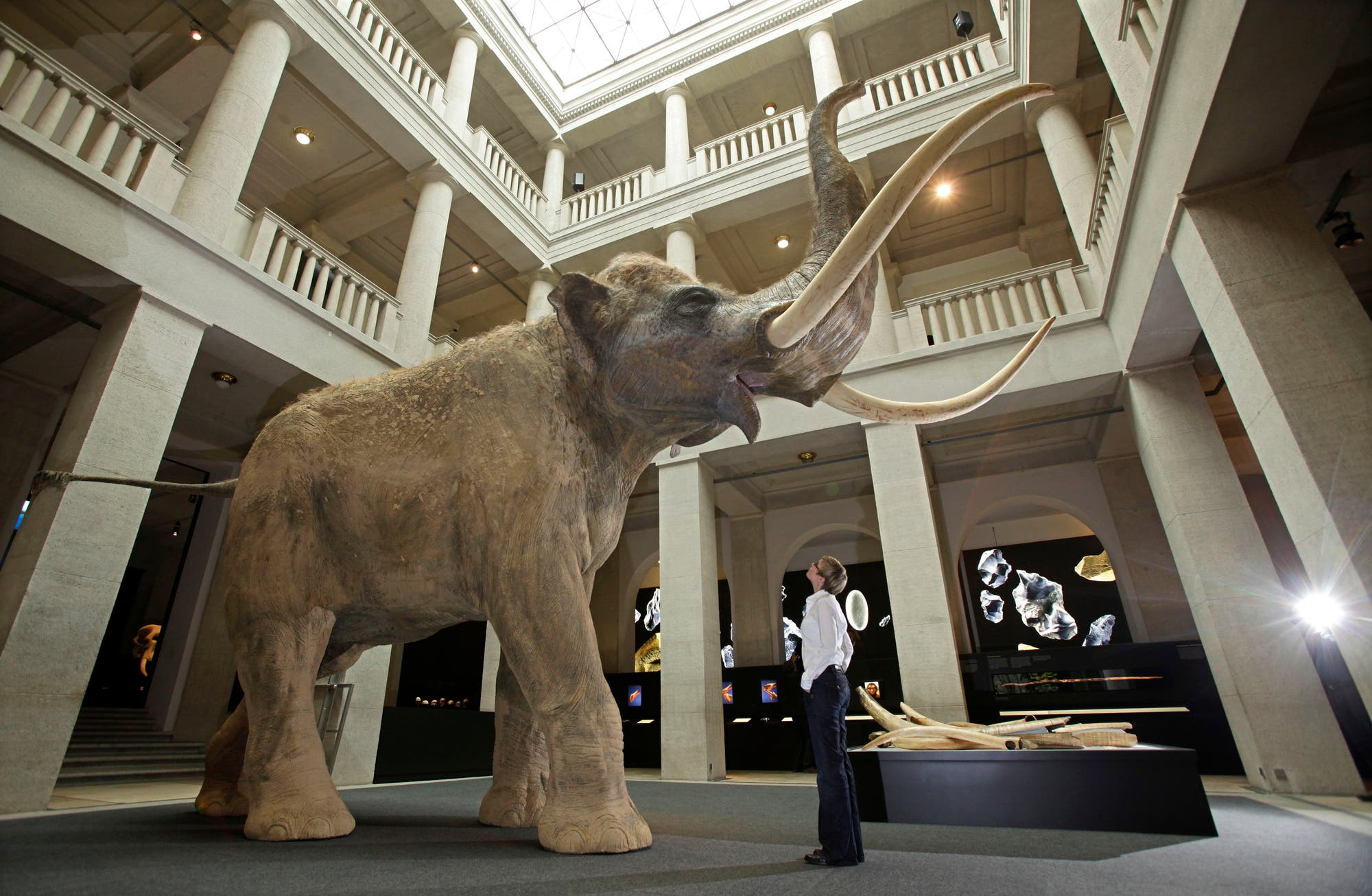 Modell eines Europäischen Waldelefanten