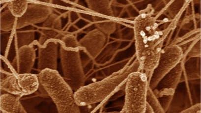 Der Metallatmer <i>Shewanella oneidensis</i> ist gut leitend vernetzt