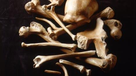 Knochen des Neandertalers