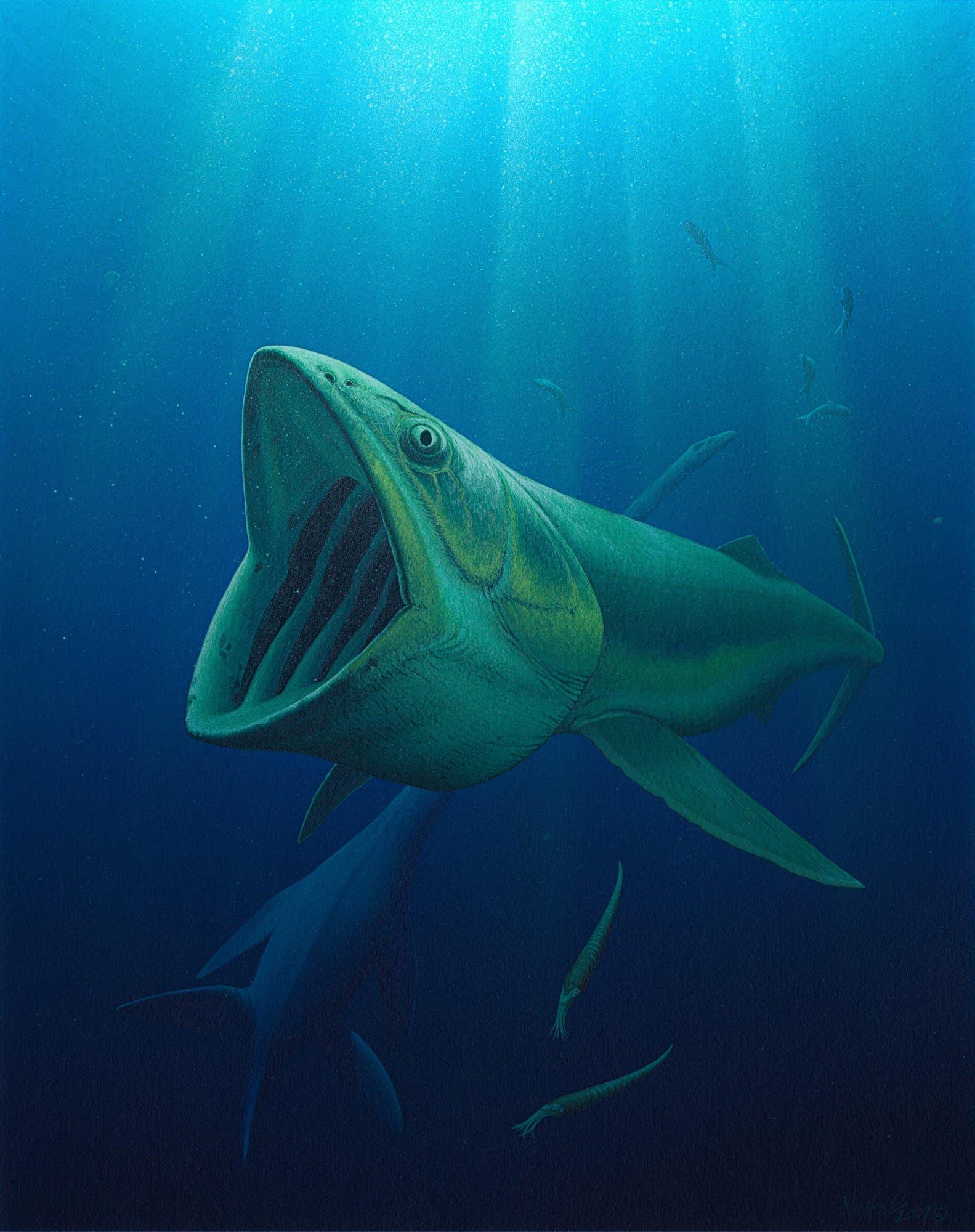 Bonnerichthys