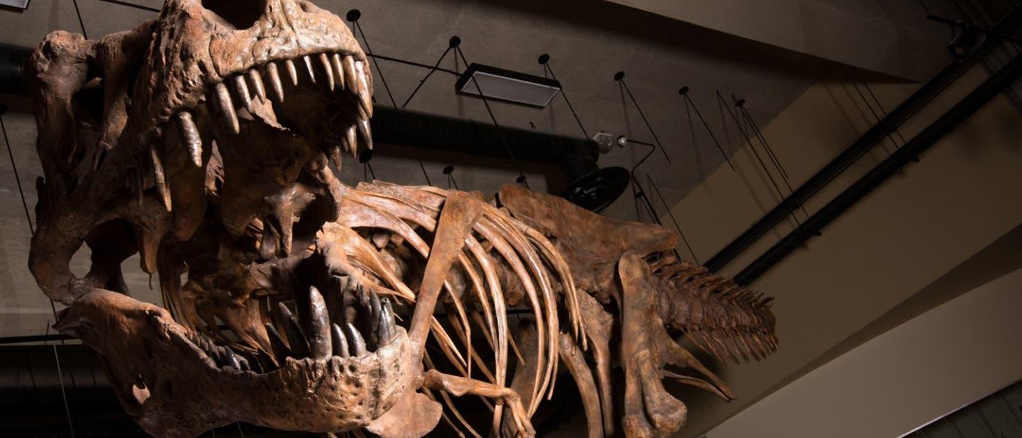 Scotty - der T. rex