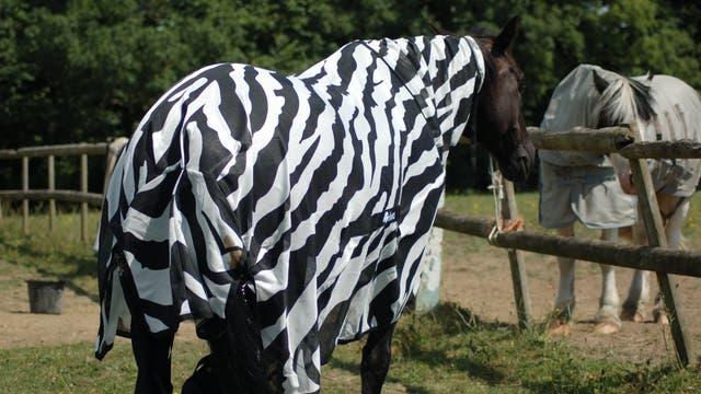 Pferd im Zebrakostüm