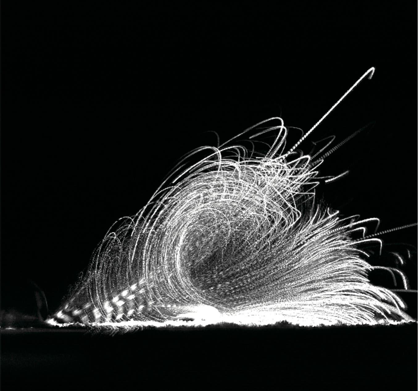 Sporen vom Rostpilz werden in einem Wirbeltrichter-Luftstrom fortgeschleudert