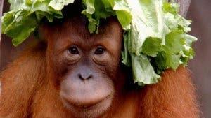 Versuchsteilnehmerin Padana im Leipziger Zoo