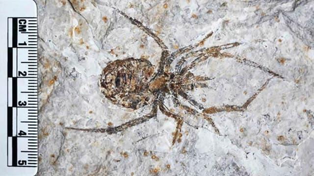 Dies ist keine Spinne. Es ist allerdings auch kein Surrealismus, sondern einfach eine gut gemachte Fälschung, die aussieht wie das Fossil einer Spinne.