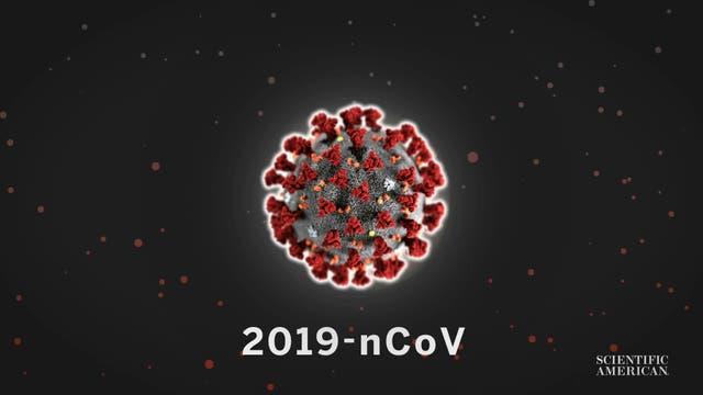 Wie schnell breitet das neue Coronavirus sich aus?