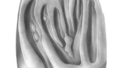 10 Millionen Jahre alter Backenzahn einer Maus