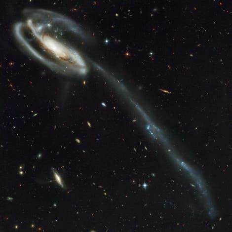 Kaulquappen-Galaxie