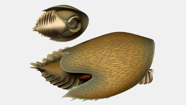 Cambroraster falcatus