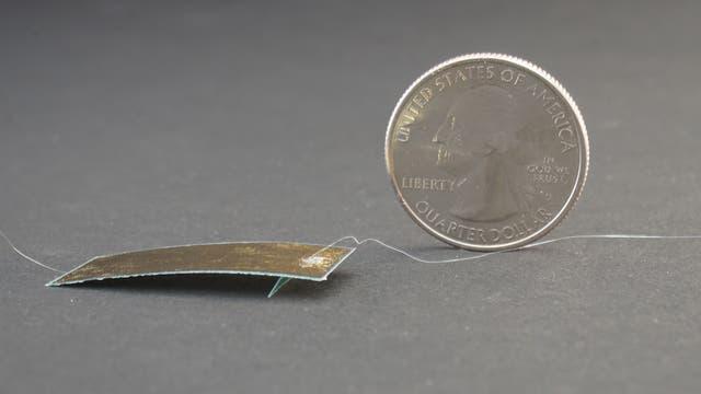 Robo-Schabe neben Münze