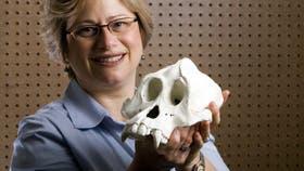 Forscherin mit Orang-Schädel