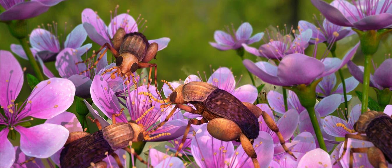 Fröhliche Kreidezeitszene: Insekten auf Bedecktsamern