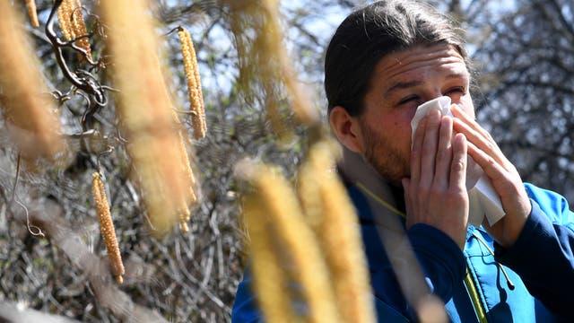 Haselnusspollen können Allergien auslösen