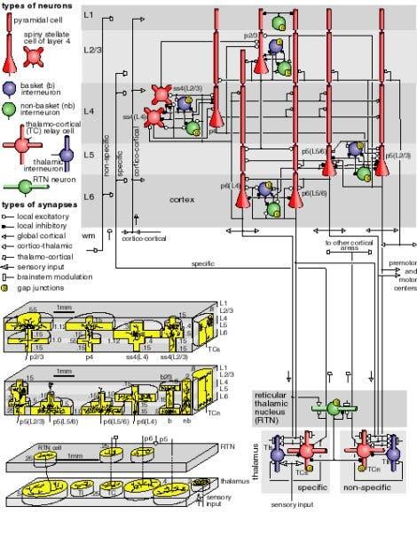Schaltplan eines simulierten neuronalen Netzwerks