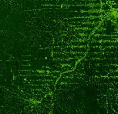 Fischgrätenmuster der Entwaldung im Amazonasbecken