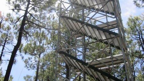 Messturm im Nadelwald