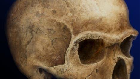 Schädel von Hofmeyr