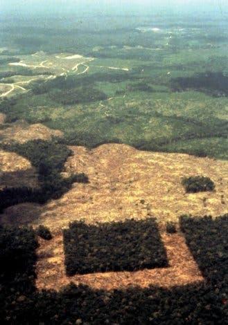 Fragmentierter Wald in Amazonien