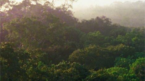 Intakter Regenwald bei Manaus