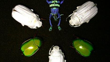 Bunte und weiße Käfer