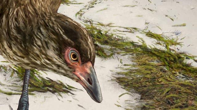 Der Urzeitvogel in einer Rekonstruktion