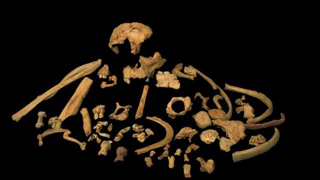 Überreste von Homo antecessor