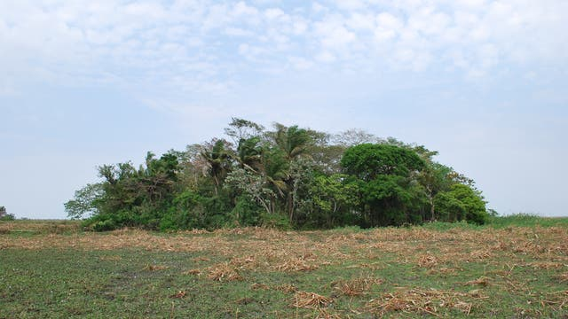 Ein Wäldchen auf einem Hügel in der bolivischen Savanne. Hier betrieben schon vor rund 10 000 Jahren Menschen Ackerbau