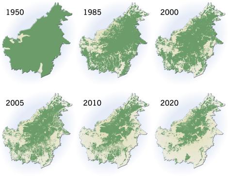 Waldverluste auf Borneo