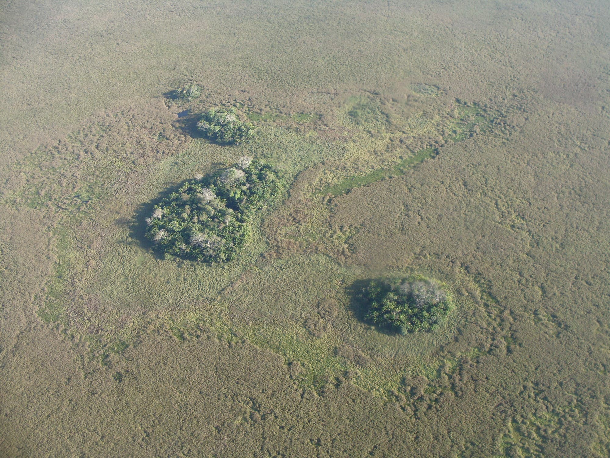 Waldinseln von oben