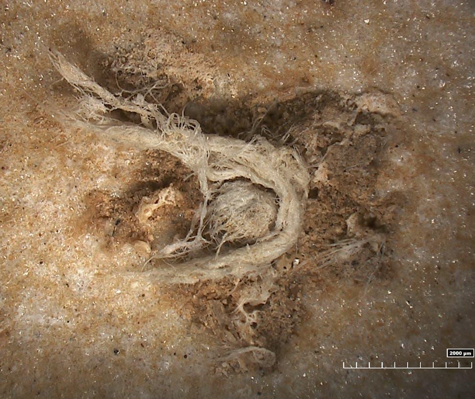 Neandertaler-Zwirn