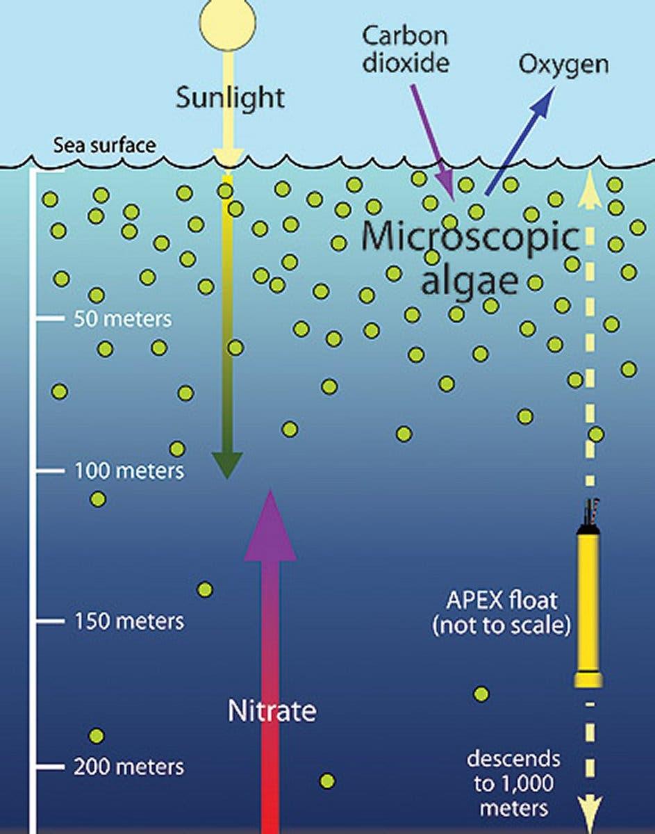 Algen und Nitrat