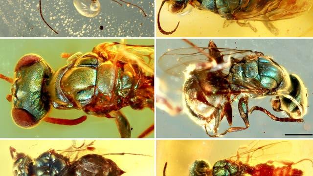 Eine Auswahl der schillernden Insekten