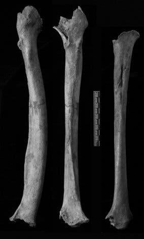 Beinknochen aus der Tianyuan-Höhle