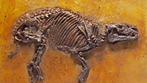 Propalaeotherium hassiacum